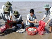 Mekong clam farmers develop sustainable value chains