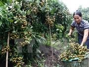 Fruit, vegetable exports hit 1.62 billion USD in five months