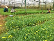 Netherlands wants to set up agricultural partnership with Can Tho