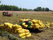 Mekong Delta province to shift rice fields to aquaculture