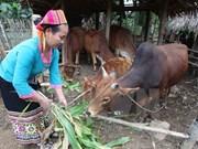Over 7.5 billion VND for women in disadvantaged border communes