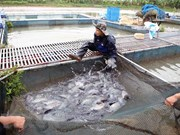 Hanoi sets up large-scale aquatic farming areas in eight districts