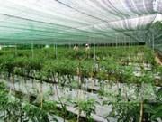 Hau Giang reviews development of hi-tech farm zone