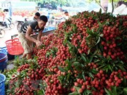 Vietnam's fruit, veggie exports exceed 2 billion USD in H1
