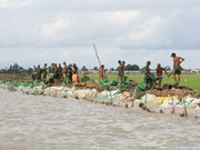 Ca Mau to build 2,000m of sea embankments