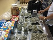 Customs officers uncover 4kg of marijuana at Tan Son Nhat airport