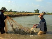 Mekong Delta records over 12,000ha of damaged crustacean farms in H1