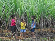 Photo exhibition demonstrates green future of biomass energy