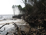 Tien Giang loses protective forests to sea