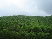 Forest quality declining despite coverage expansion: expert