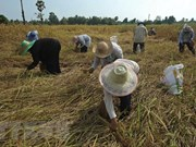 Thailand spends nearly 3 billion USD supporting rice sector
