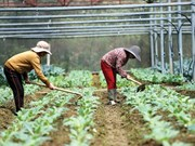 More investment needed for agriculture sector