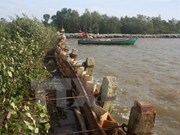 Nearly 2.6 million USD for sea embankment projects in Ca Mau