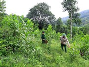 Thua Thien-Hue eyes sustainable forest development