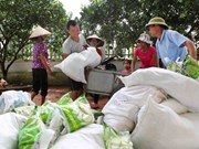 Over 618 tonnes of rice offered to Lai Chau province