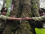 Precious trees recognised as heritage