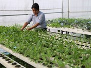 Quang Tri offers incentives for firms investing in hi-tech agriculture