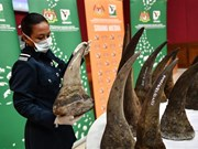 Malaysia seizes rhino horns worth 12 million USD