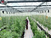 Sci-tech application key to developing smart agriculture