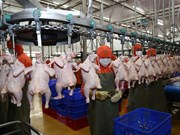 Farmed chicken price falls, as problems come home to roost