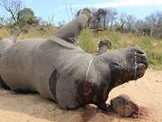 Short film calls for end to rhino massacres
