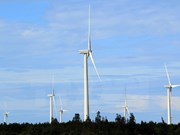 Foreign investors interested in wind power development in Vietnam
