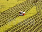 Can Tho boosts agricultural shake-up towards sustainable development