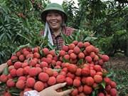 Vietnam struggles to export fruits to demanding markets