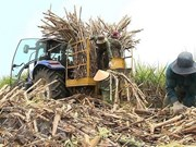 Vietnam to auction sugar import quotas for 94,000 tonnes