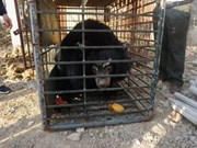 Last private bear bile farm in Tien Giang closed