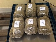 Marijuana trafficking ring from US to Vietnam uncovered