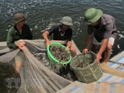 Khanh Hoa develops seafood, ecological protection