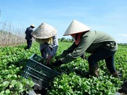 Seminar discusses RoK's new rural development model