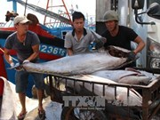 Thua Thien-Hue spends 1.5 million USD to support fishermen