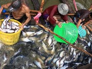 Mekong Delta region makes up 18 percent of GDP