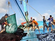Binh Thuan steps up disseminations to fight IUU fishing