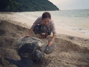 Con Dao Island pioneers sea turtle protection