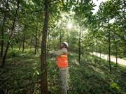 WWF report warns ASEAN banks