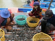 Removing EC's yellow card key to boosting seafood exports