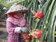 VN's fruits need to gain domestic market before exporting: experts