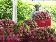 Binh Thuan promotes dragon fruits in India