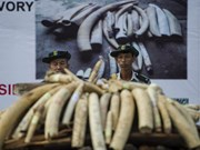 Myanmar destroys 1.3 million USD worth of trafficked wildlife parts