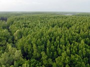 Finland helps Vietnam build forestry database