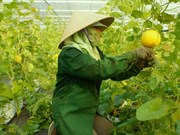 Central Da Nang city eyes hi-tech farms
