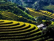 Vietnam's tourism sector works to attract more foreign tourists