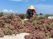 Quang Ngai province struggles to lift farmers out of poverty