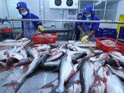 Global market bodes well for Vietnamese tra fish exports