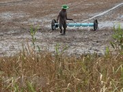 Mekong Delta likely to face drought, salinity in winter-spring crop