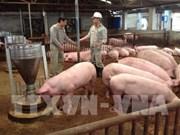 Vietnam needs national framework for safe pork
