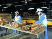 Forestry sector in 5.72 billion USD trade surplus